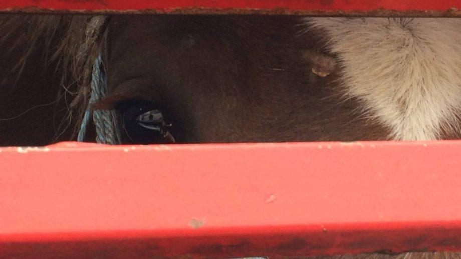 animal welfare bill parliament