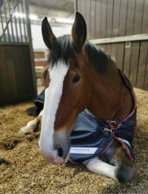 Cavalo da polícia Orkney
