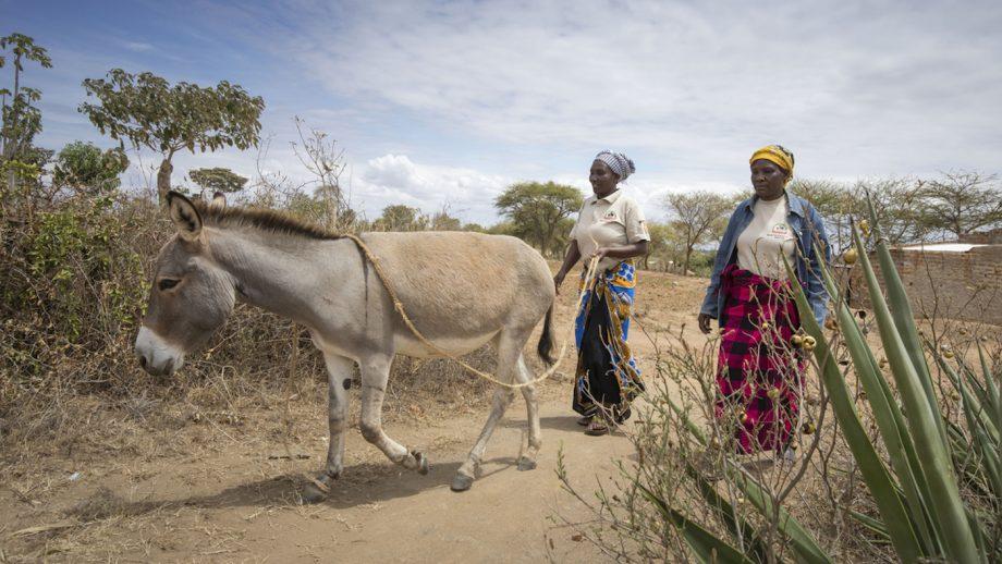 Brooke donkey skin trading East Africa