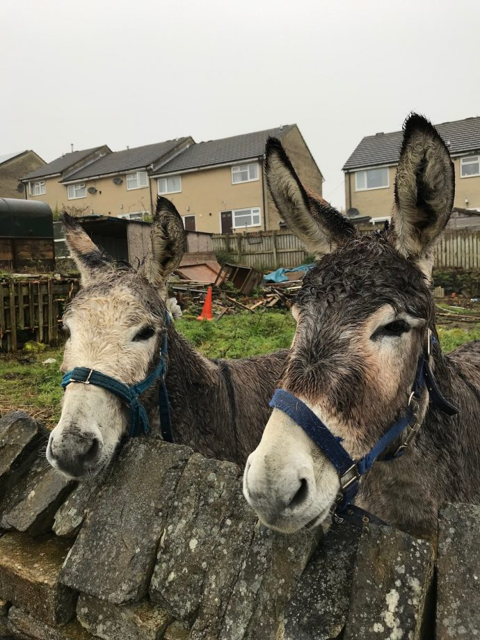 Suffering donkey RSPCA The Donkey Sanctuary