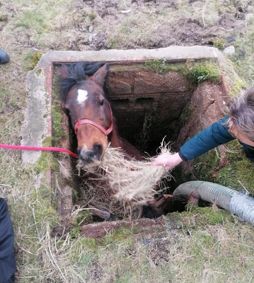Fire crews rescue horse trapped in slurry pit