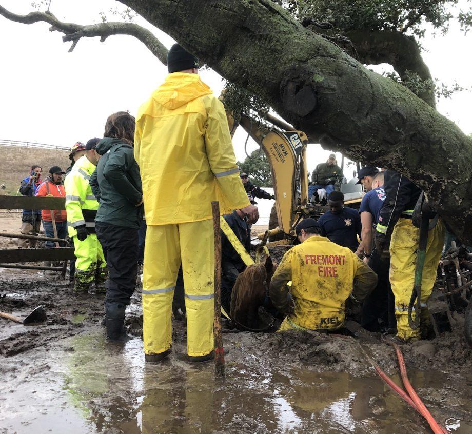 horse pony rescue landslide Monterey County California