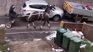 Surrey Police appeal man beat horse and dog