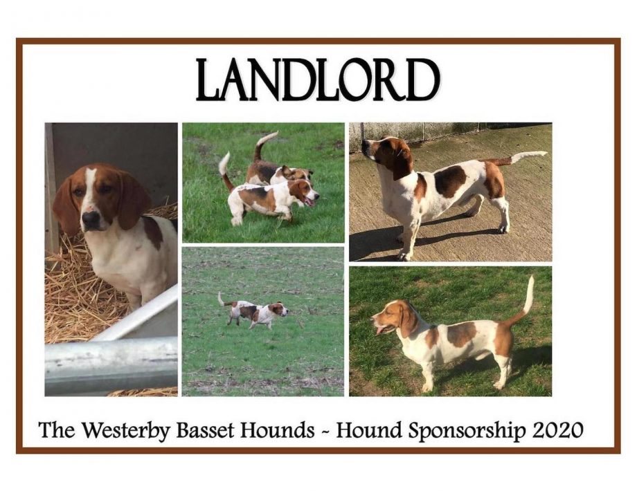 Westerby basset hounds stolen