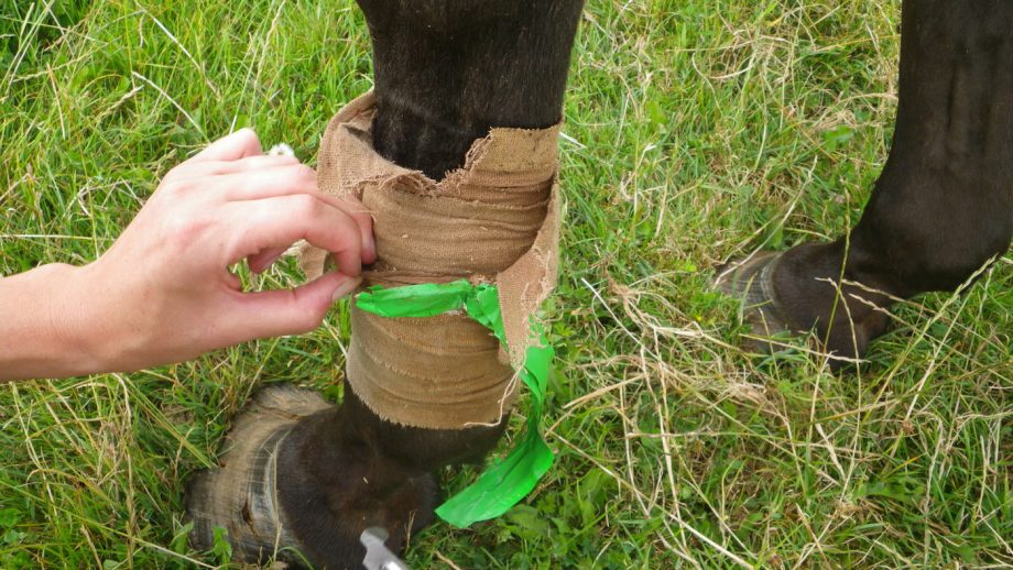 RSPCA rescued horse put down