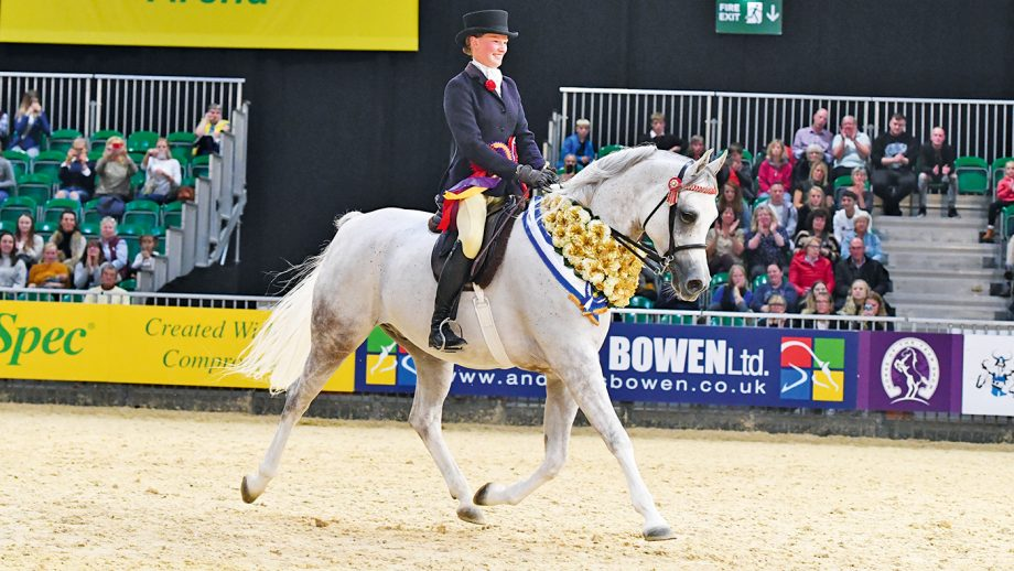 Rafeekah, being ridden by Kerry Bates, to win the Purebred Arab of the Year at HOYS