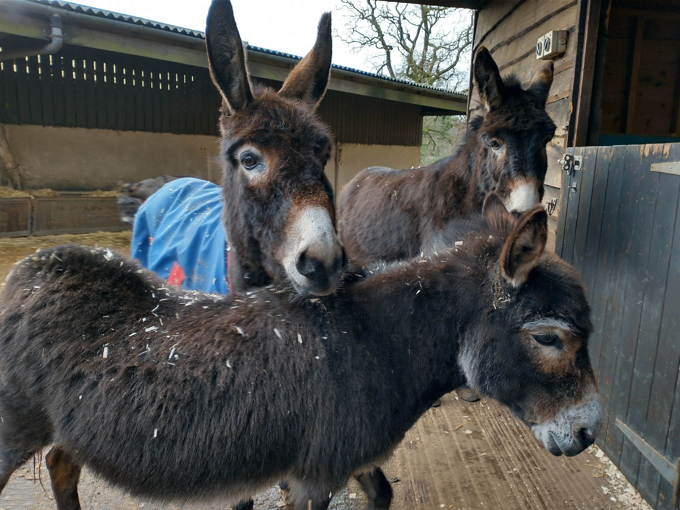 Moment of hope in sadness as rescue donkey bonds with new friend after  companion's death - Horse & Hound