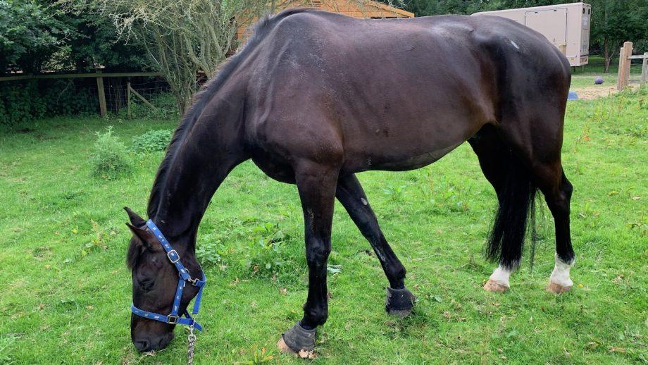 equine grass sickness awareness