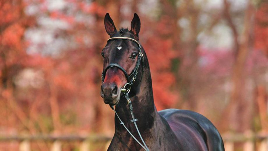breeding stallion Sir Shutterfly died