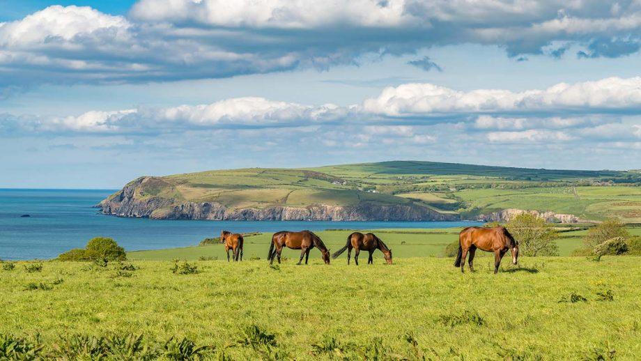 Horses at the cloudy Pembrokeshire coast, seen near Parrog, Dyfed, Wales.