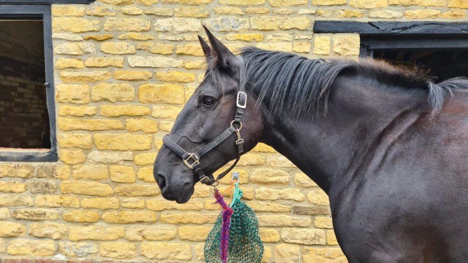 new recruit police horse