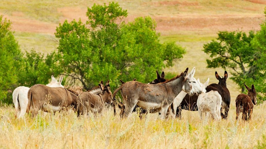 wild horses burros