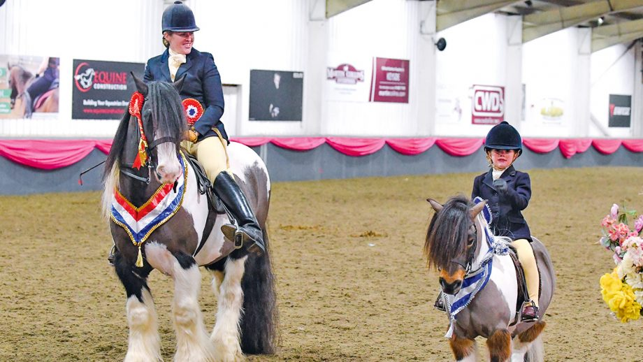 Brickell Mr Pickwick, exhibited by Rebecca Lock, Champion and Evie's Pride, exhibited by Scarlett Sharp, reserve in BSPA Supreme Ridden Championship, during the BSPA Festival of Showing & Winter Championships held at the College Equestrian Centre in the village of Keyoe in the county of Bedfordshire in the UK on the 25th February 2018