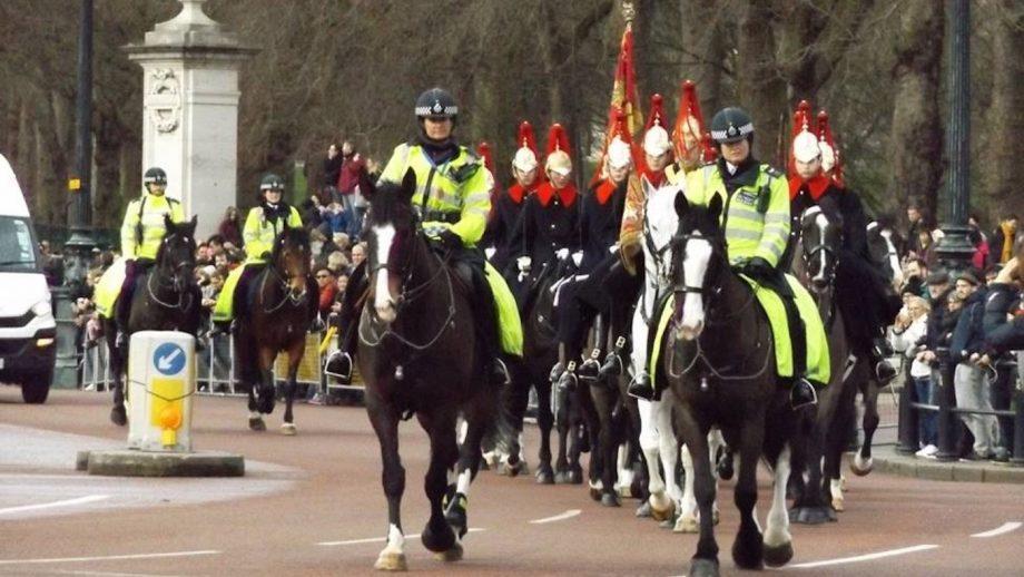 Metropolitan Police retired police horse