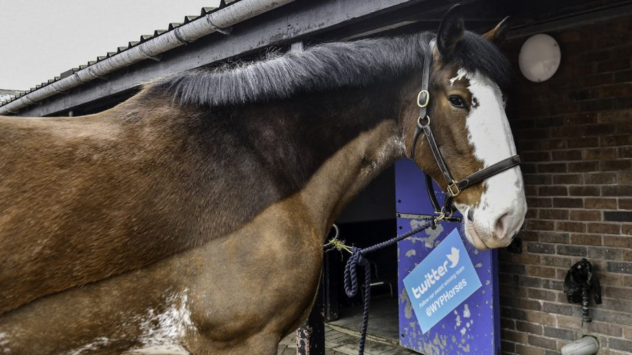 West Yorkshire Police police horse Clydesdale