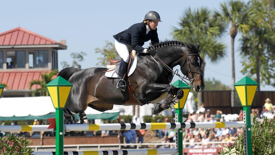 showjumping stallion dies