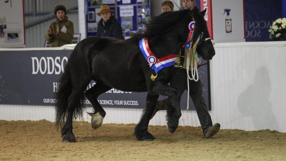 rare breed horses