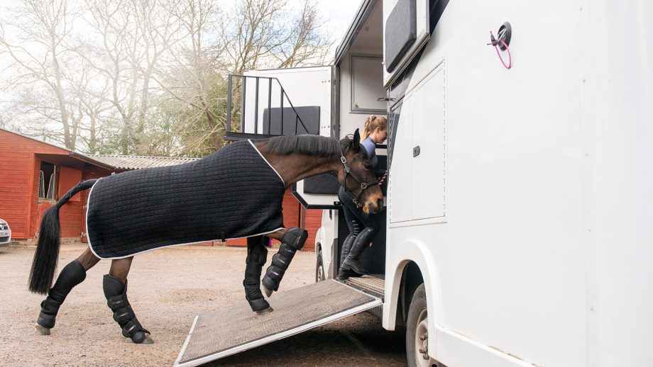 travel, lorry. horsebox, loading