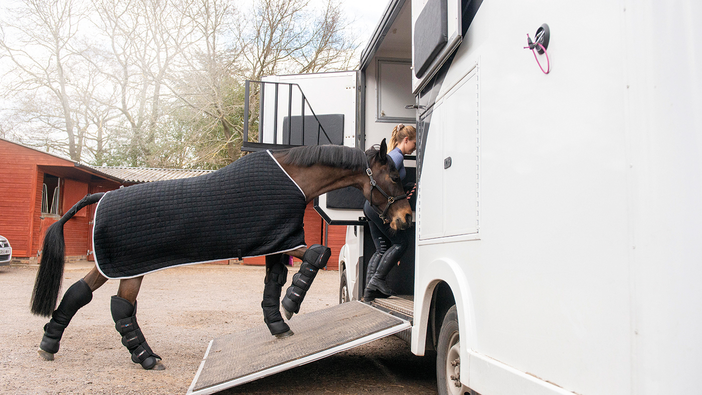 How to help keep your horse happy and healthy while in transit *H&H Plus* - Horse & Hound