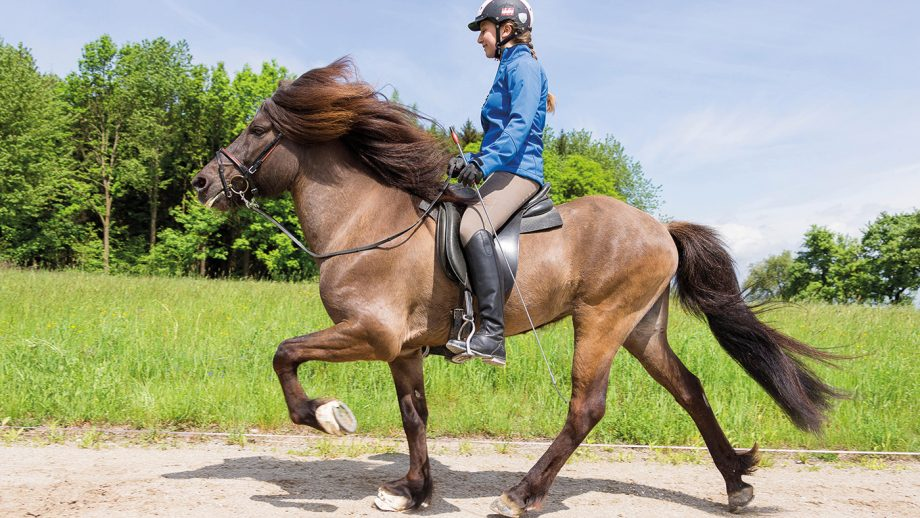 F64Y5H Icelandic Horse. Girl performing the toelt on a stallion on a riding place. Austria