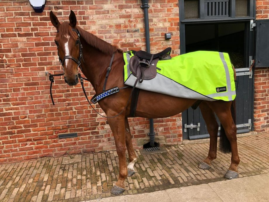 Police horse Northumbria Police