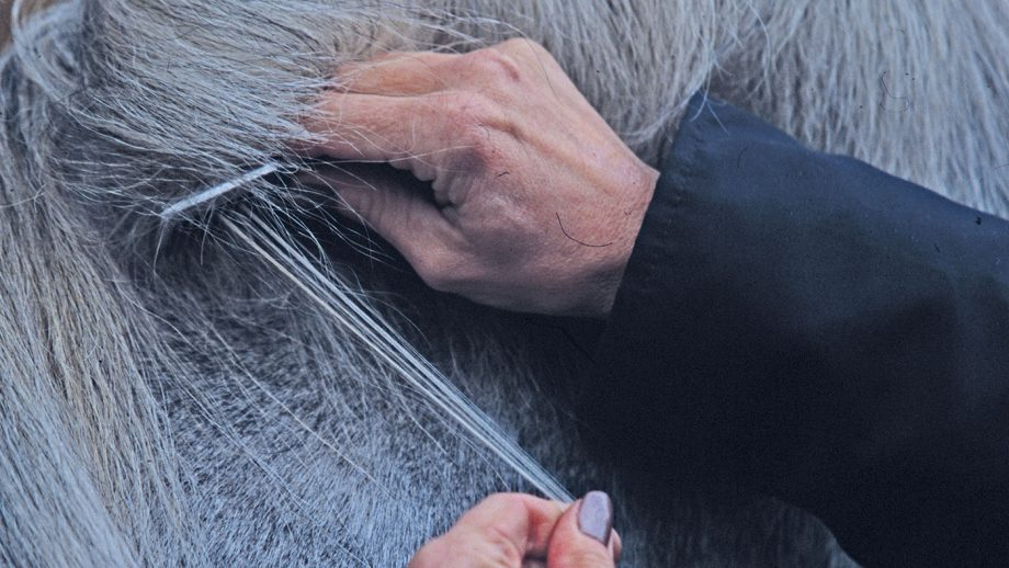 Here is your complete guide and top tips on how to pull a horse's mane