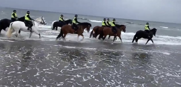 Police horses have a blast and 6 other great bits of horsey social media this week