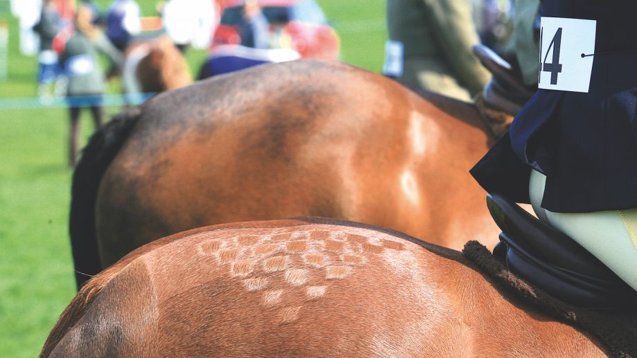 horse welfare showing