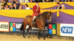 Top show horse Finn McCool become a brilliant huntsman's horse for Guy Landau
