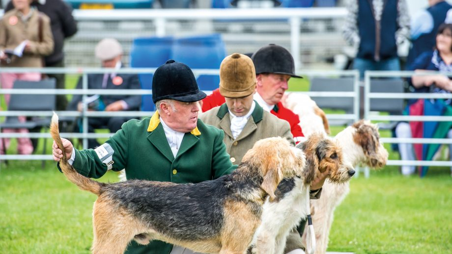 judging in the welsh ring (3)