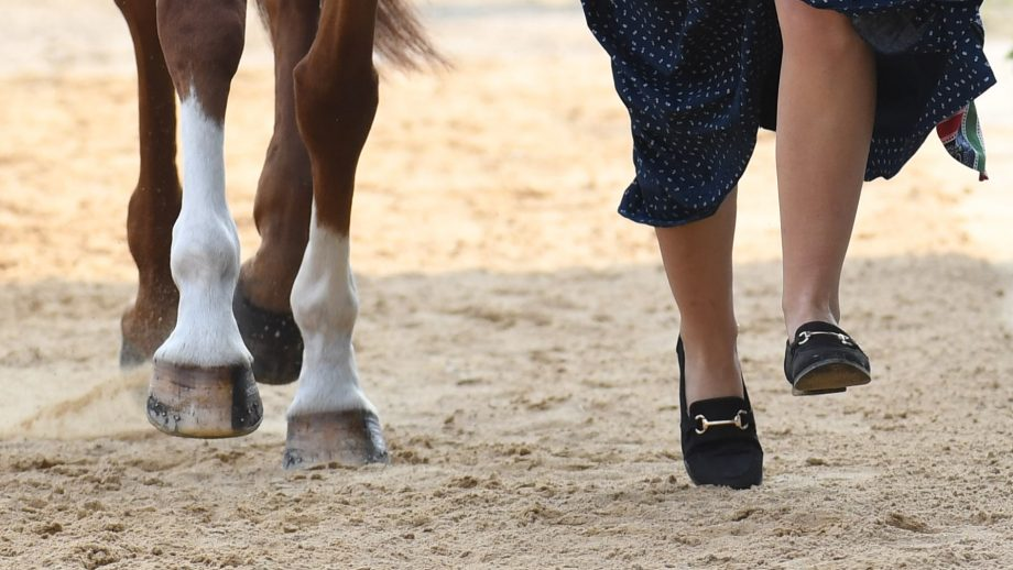 Luhmuhlen Horse Trials first trot-up. Library image of horse and rider legs