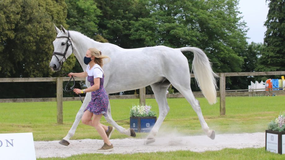 Bicton Horse Trials first trot-up: Eliza Stoddart and Renaissance Man