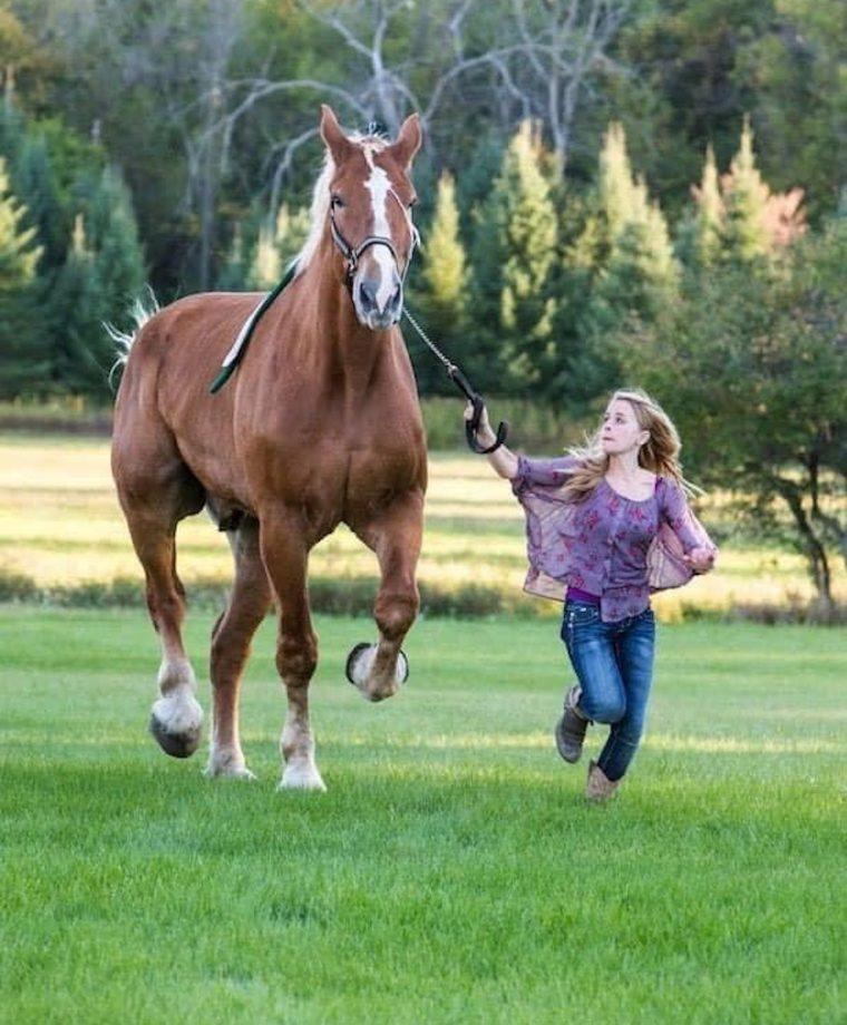 world's tallest horse