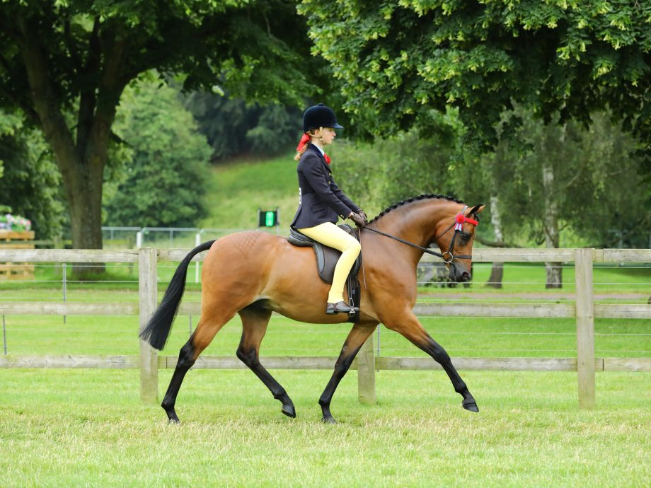 Rotherwood Fancy That and India Till, novice show pony champions at the 2021 Royal Windsor Horse Show