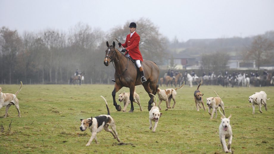Huntsmen Michael Scott with the Old Berkshire Hunt hounds in the Oxfordshire countryside.