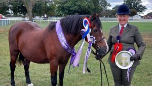Danielle Twitchen's veteran driving pony turns his hoof to in-hand showing