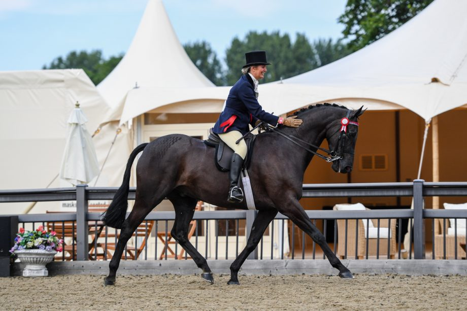 Forgelands Hyde Park and Sarah Walker are overall hack champions at the Royal Windsor Horse Show