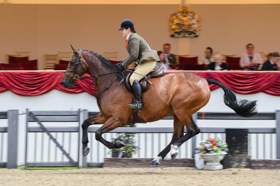 Kelly Ward and Cheryl Farrow's Bloomfield Incognito win the working hunter title at the 2021 Royal Windsor Horse Show