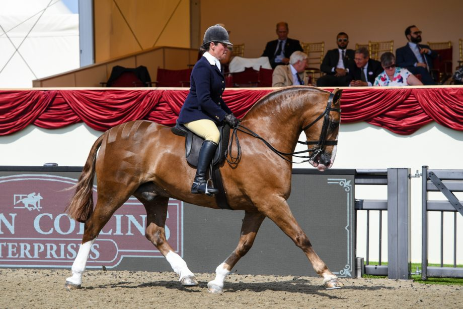 Vicky Smith and Bling Cobsby overall cob champion at the 2021 royal windsor horse show
