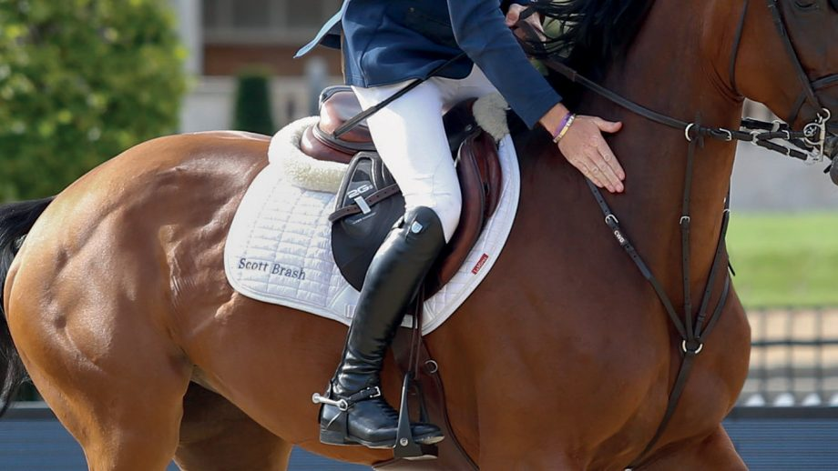 Best jumping saddle pads