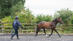 Examining a horse for lameness with sensors