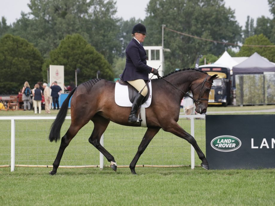 The Queen's Daydream III and Katie Jerram-Hunnable win their ridden sport horse class on day one of Royal Windsor