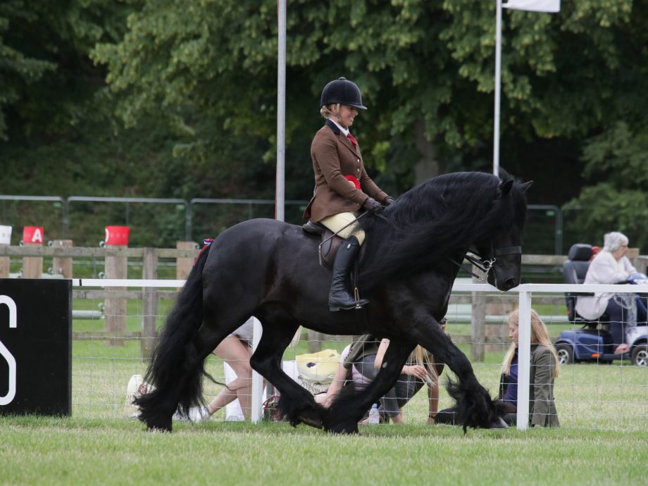 Nipna Midnight Rambler and Sarah Parker are M&M ridden champions at the 2021 Royal Windsor Horse Show