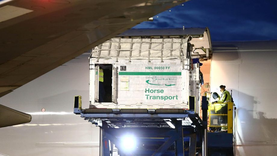 T26902 NORRKOPING 2016-05-23 For the first time, trotting horses come in with direct flights to Sweden directly from the USA to compete in Elitloppet on May 27-29 at Solvalla. The aircraft model Boeing 747-400 F is one of the world's largest aircraft, the plane is 70 meters long and has a span of about 65 meters between the wing tips. Photo Jeppe Gustafsson