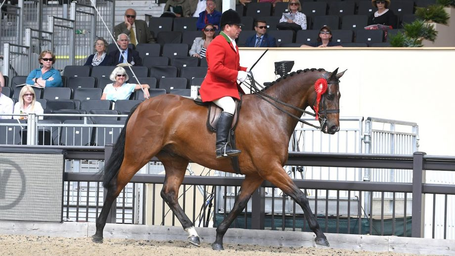 Robert Walker riding View Point in the hunter championships at Royal Windsor Horse Show 2018