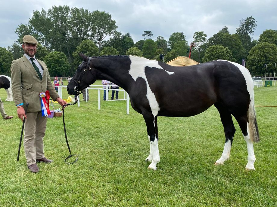 Alan Marnie and Vicky Smith's Ashlea Perfect Spirit is in-hand coloured champion at the 2021 Royal Windsor Horse Show