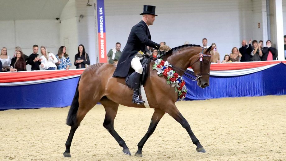 Jordan Cook scoops ridden horse supreme aboard the hack Sutton Grange Lady Eleanor, earning them the Rory Gilsenan memorial trophy at UK nationals showing show
