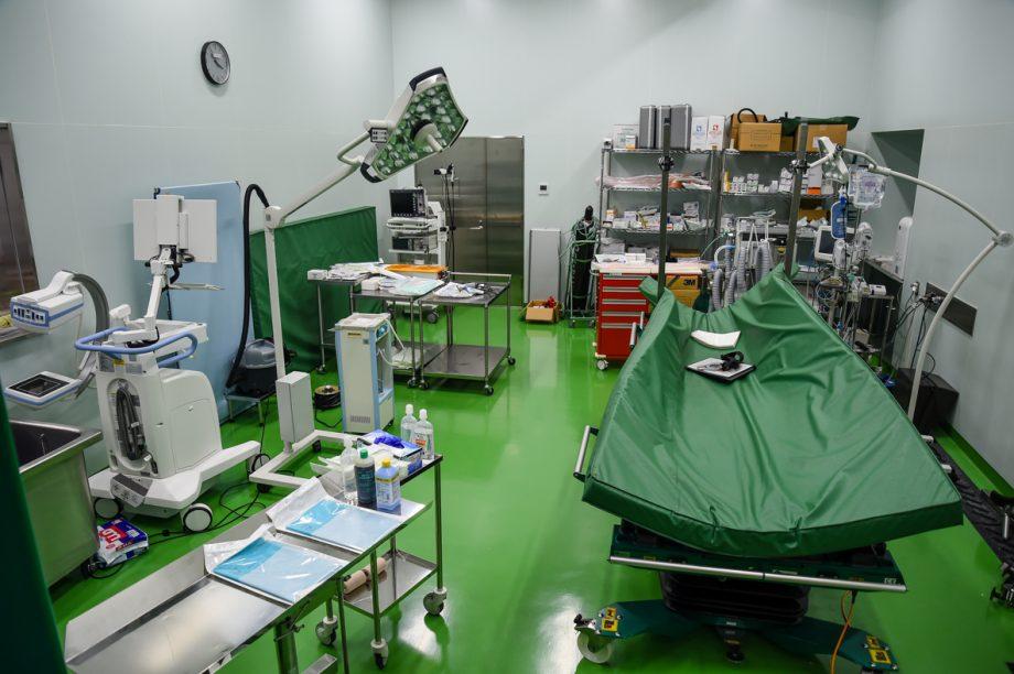 Tokyo Olympics vet clinic: surgery