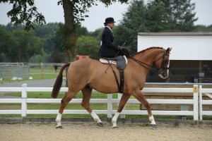 Cloneyhea Clancy is off to HOYS