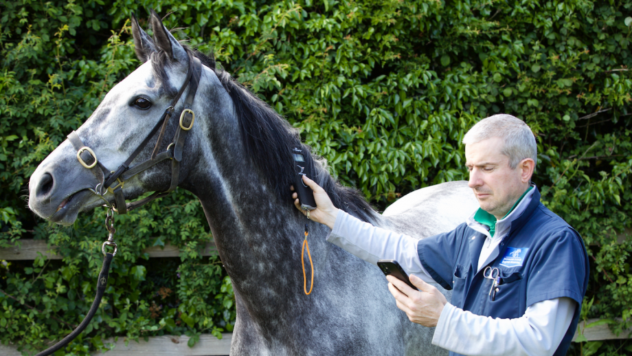 The EquiTrace app has been developed to help improve equine traceability and welfare.